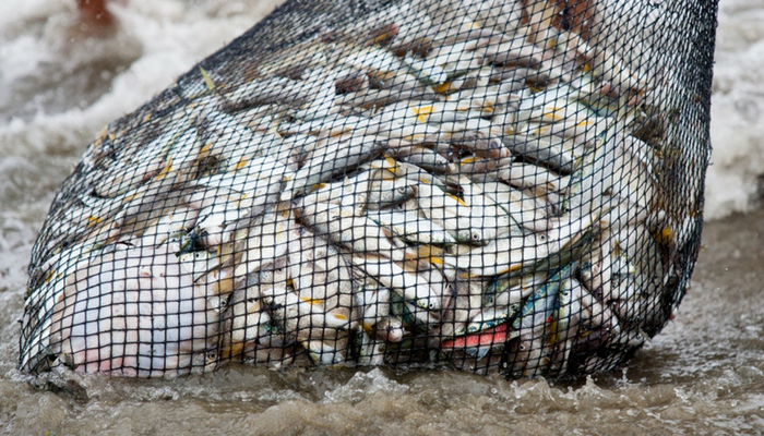 Drag nets are not sustainable fishing catching fish just to be discarded